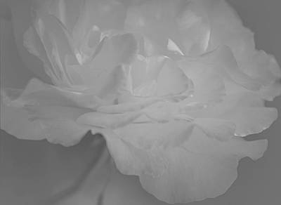 White Roses Photograph - Pure Sincerity by The Art Of Marilyn Ridoutt-Greene