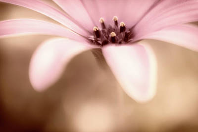 Photograph - Pure Sweetness by Marnie Patchett