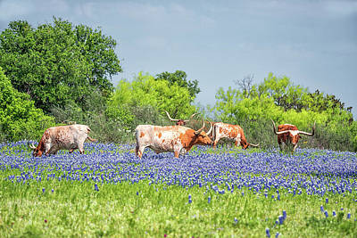 Photograph - Pure Texas by Victor Culpepper