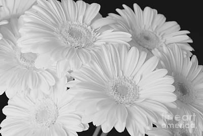 Photograph - Pure White Gerbera Daisies by Jeannie Rhode