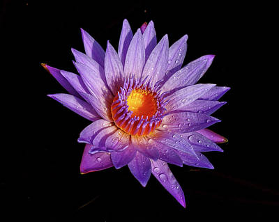 Photograph - Purely Purple by Wes and Dotty Weber