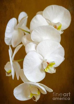 Photograph - Purest White by Elizabeth Winter