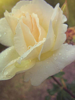 Photograph - Pure White Rose by JAMART Photography