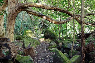 Photograph - Puriri Grove by Nicholas Blackwell