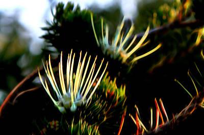 Photograph - Purity Of Nature by Miroslava Jurcik