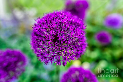 Photograph - Purple by Adrian Evans