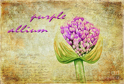 Onion Digital Art - Purple Allium Bud by Lois Bryan