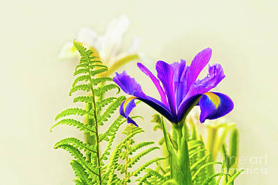 Photograph - Purple And Blue Iris by Terri Waters