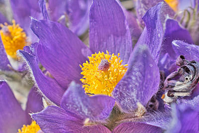 Photograph - Purple And Gold - Bright by Cathy Mahnke