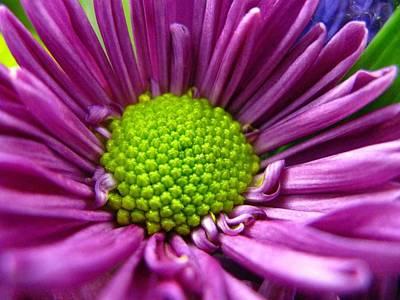 Photograph - Purple And Green by Rhonda Barrett