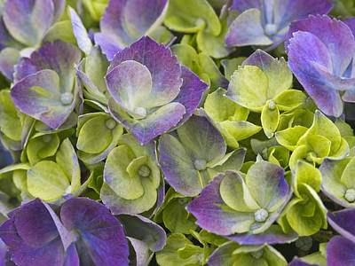 Purple And Lime Art Print