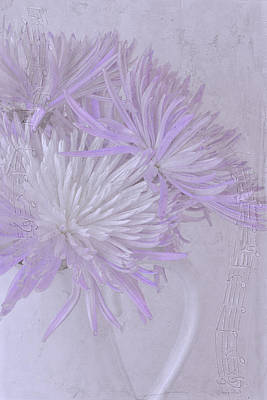 Photograph - Purple And White Mums by Sandra Foster