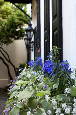 Photograph - Purple And White Window Box by Heather Green