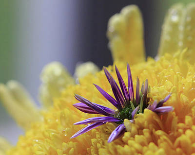 Photograph - Purple And Yellow Floral by Angela Murdock