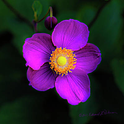 Photograph - Purple And Yellow Flower by Edward Peterson