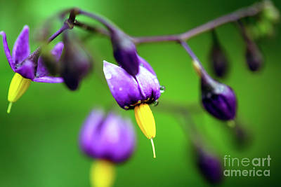 Photograph - Purple And Yellow by John Rizzuto