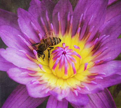 Photograph - Purple And Yellow Lotus With A Bee Textured by Teresa Wilson