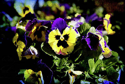 Photograph - Purple And Yellow by Milena Ilieva