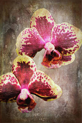 Photograph - Purple And Yellow Orchid 3723-3735 Art by Rudy Umans