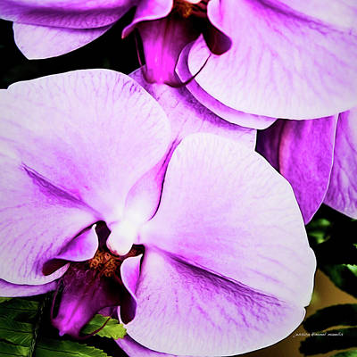 Wall Art - Photograph - Purple Angel by Jessica Manelis