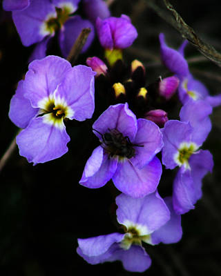 Photograph - Purple Arctic Wild Flowers by Anthony Jones