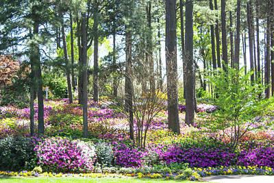 Sheep - Purple Azalea Garden  by LaMont Johnson
