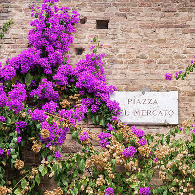 Photograph - Purple Azaleas Background by Alexandre Rotenberg