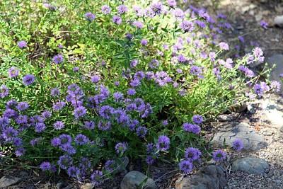 Purple Bachelor Button Flower Art Print