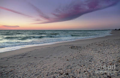Photograph - Purple Beach by Karin Pinkham