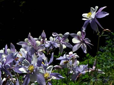 Photograph - Purple Beauties by George Tuffy