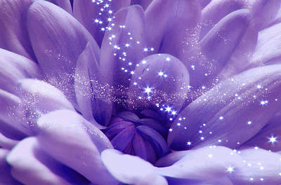 Photograph - Purple Beauty And Magic Dust by Johanna Hurmerinta
