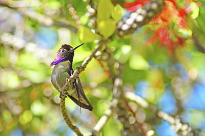 Photograph - Purple Beauty by Lynn Bauer