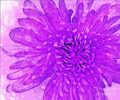 Photograph - Purple Beauty by Rachel Hannah