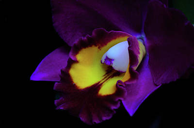 Photograph - Purple Beauty by Stewart Helberg
