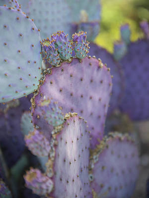 Photograph - Purple Beauty by Sue Cullumber