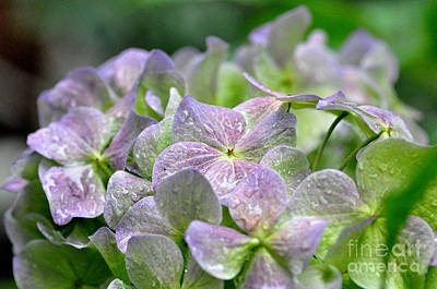 Photograph - Purple Beauty by Tanya Searcy