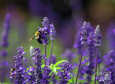 Jeffery Johnson Photograph - Purple Bee by Photo Captures by Jeffery