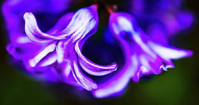 Photograph - Purple Bells by JimO Ogilvie