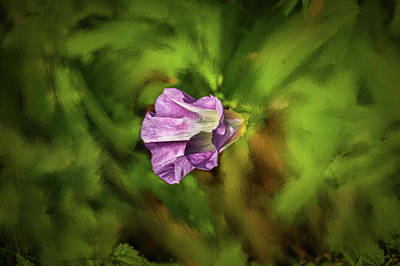 Photograph - Purple Bindweed #h8 by Leif Sohlman
