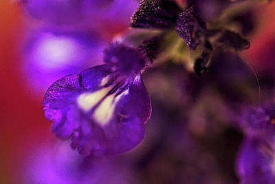 Photograph - Purple Blends by Richard Gregurich