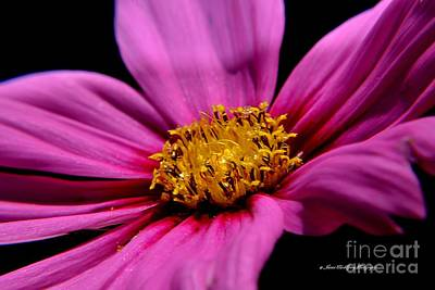Photograph - Purple Bloom by Janice Spivey
