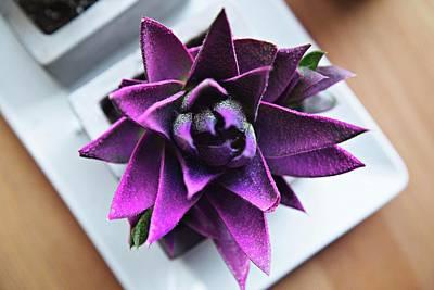 Purple Flowers Digital Art - Purple Bloom by Billy Soden