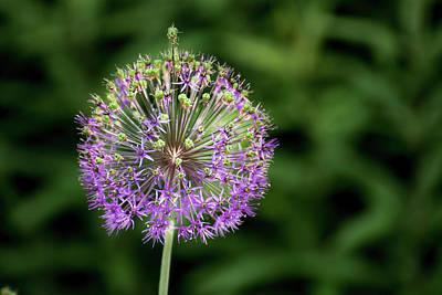 Pyrography - Purple Blossom  by Douglas Milligan