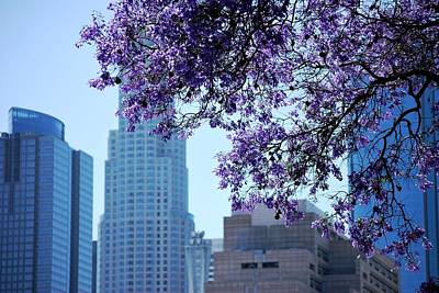 Photograph - Purple Blossom Tree Downtown Skyscapers by Matt Harang