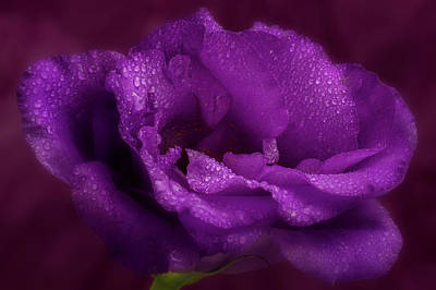 Photograph - Purple Blossom Wit Morning Dew by Garry McMichael