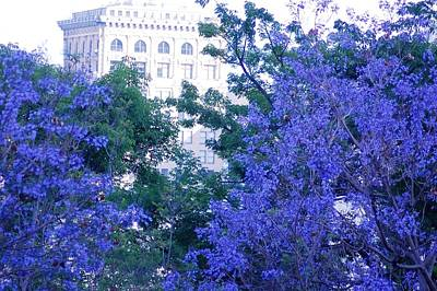 Photograph - Purple Blossoms Downtown Los Angeles by Matt Harang