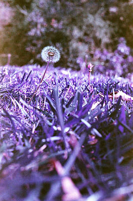 Photograph - Purple Blowball by Lon Casler Bixby