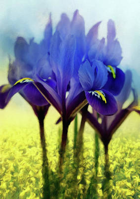 Mixed Media - Purple Blue Iris In A Field Of Yellow by Georgiana Romanovna