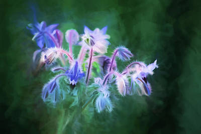 Painting - Purple Borage by Bonnie Bruno