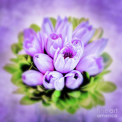 Lilies Royalty-Free and Rights-Managed Images - Purple bouquet by Delphimages Photo Creations